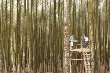 Kementerian Wisata Fokus Genjot Pengembangan Desa Wisata